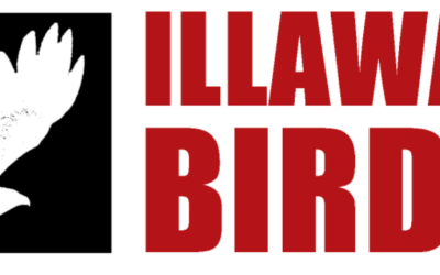 Illawarra Birders