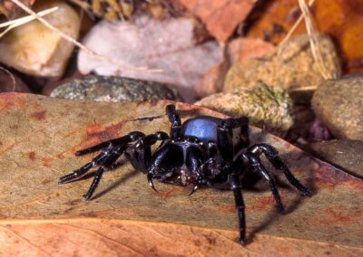 Spiders, Scorpions and Allies